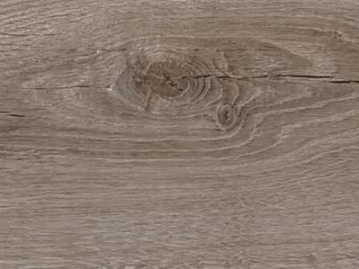 Primero 22847 Sebastian oak